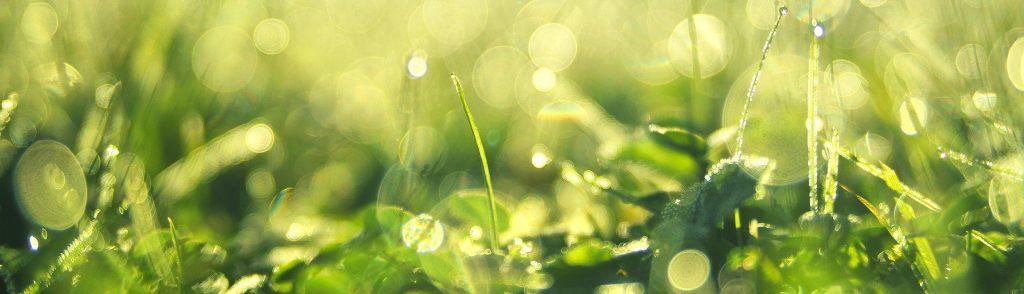 Ekologisk hudvård innehåller ämnen från naturen som är ekologiskt odlade.